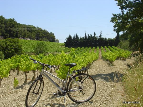 Cycling & Wine in Provence
